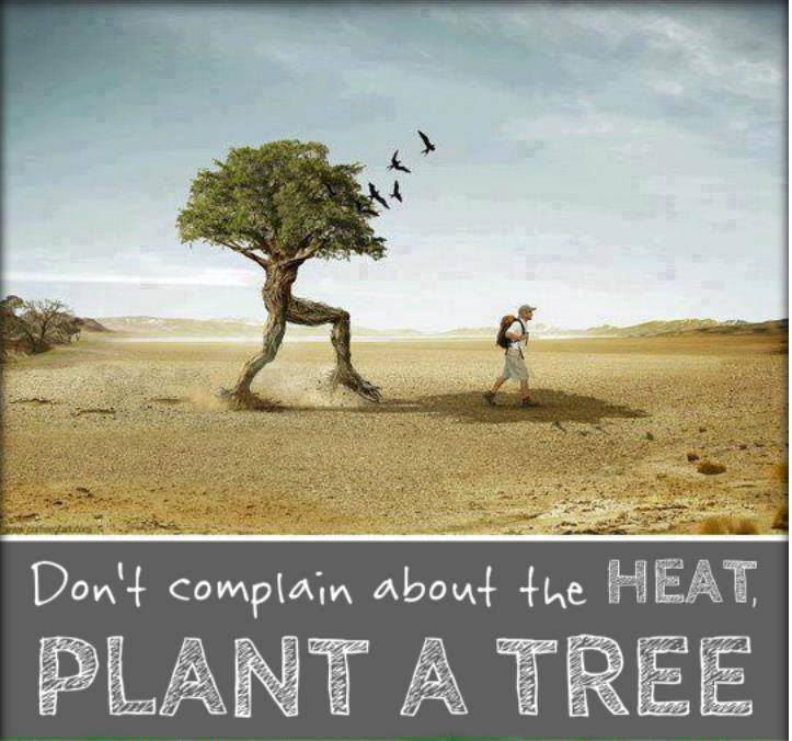 Don't Complain about the heat. Plant a Tree.