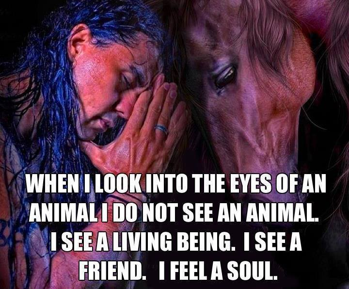 Treat Animals As Humans, They Are Also A Soul.