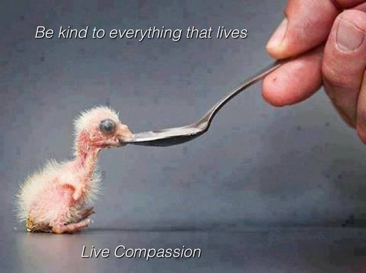 Baby Chicken Quotes: A Small Act Of Kindness Can Bring Smile